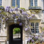 Wisteria and passage to Third Quad